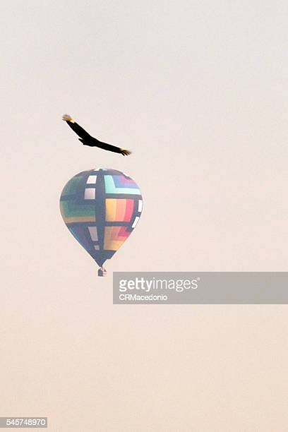 ballooning in piracicaba. - crmacedonio stock pictures, royalty-free photos & images