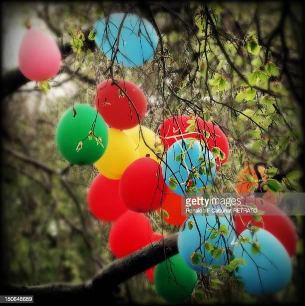 Balloons hanging on tree