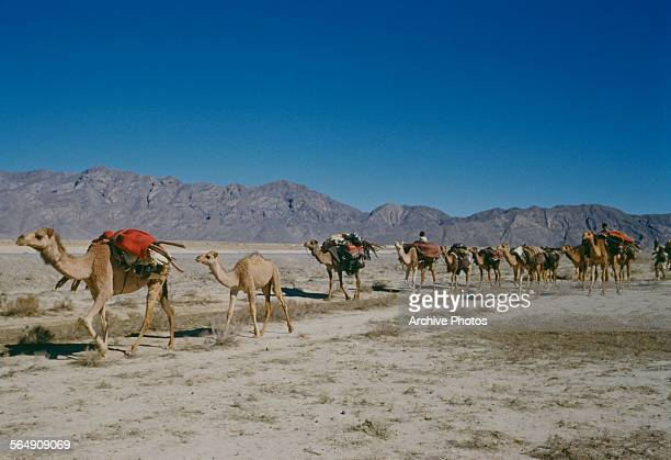 Baloch tribes using camels for transport in Balochistan southwestern Asia circa 1965