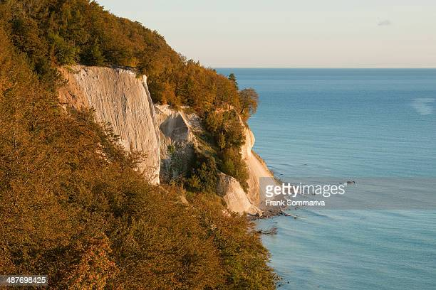 Baltic Sea, chalk cliffs and beech forest, Common beech trees -Fagus sylvatica-, in autumn, Jasmund National Park, Mecklenburg-Vorpommern, Germany