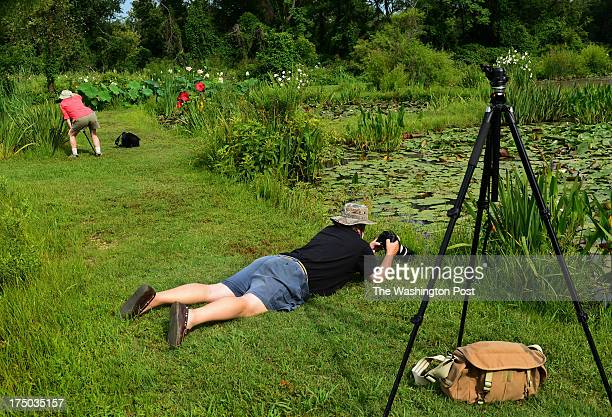 Baltimore Camera Club members Karen Dillon and Steven Oney take position to photograph water lillies in bloom at Kenilworth Aquatic Gardens in...