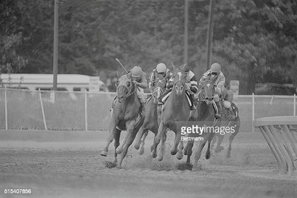 As the Preakness field rounds the 4th turn and heads for the finish line winner Affirmed center leads the way as second place finisher Alydar drives...