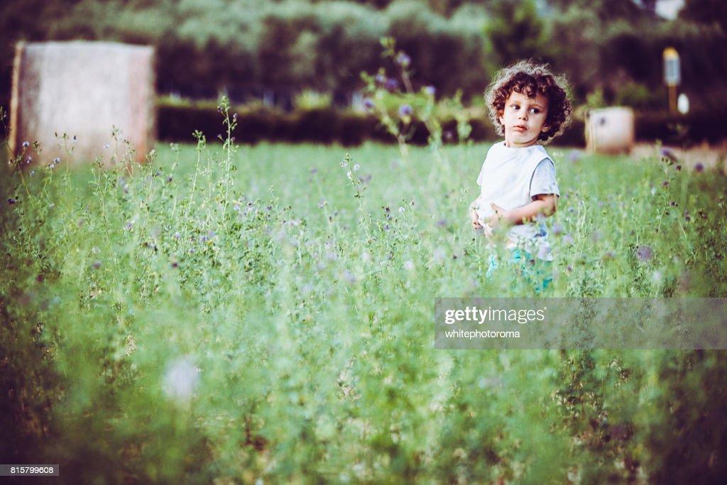 Bambino passeggia  in una distesa di  fiori e fieno in estate