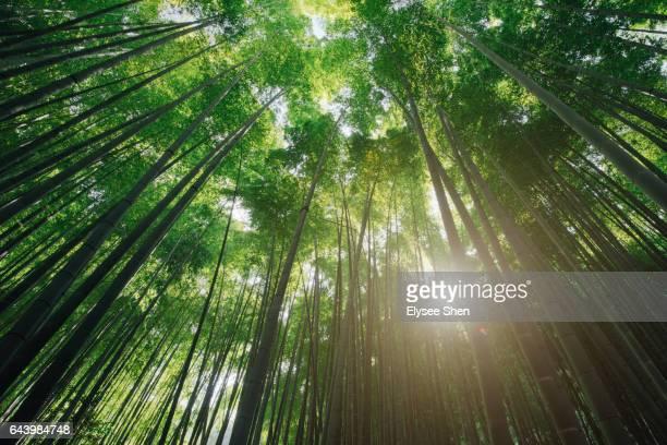 Bamboo and sunshine