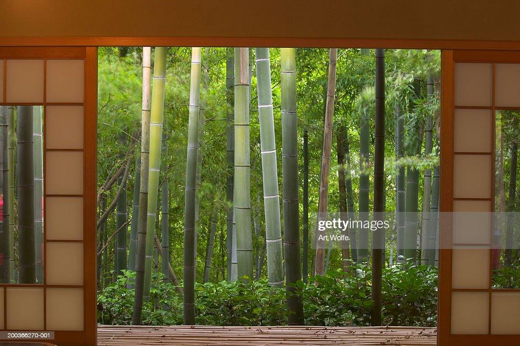 Bamboo as viewed through tea house windows, Kyoto, Honshu, Japan : Stock Photo