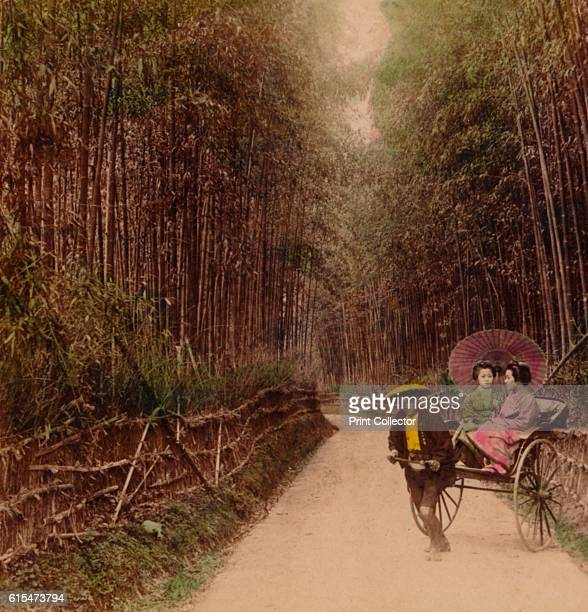 Bamboo Avenue Kyoto Japan' 1896 From The Underwood Travel Library Japan [Underwood Underwood London New York 1896] Artist Unknown