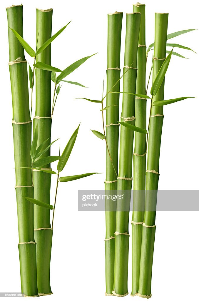 Bamboo Beauty : Stock Photo