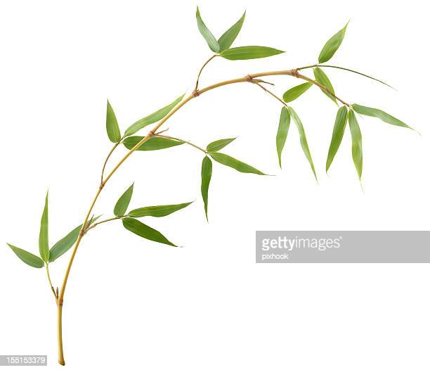 bamboo branch - bamboo stock photos and pictures