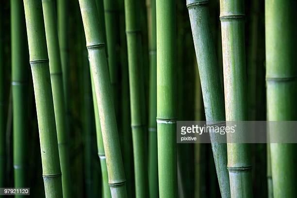 Bambus canes