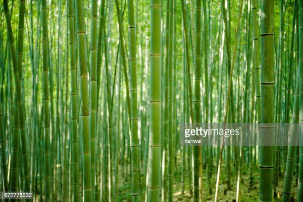bamboo forest 02 - bamboo stock photos and pictures