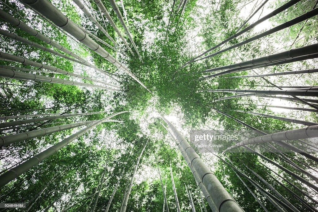 Bamboo Forest, Arashiyama, Kyoto,Japan : Stock Photo