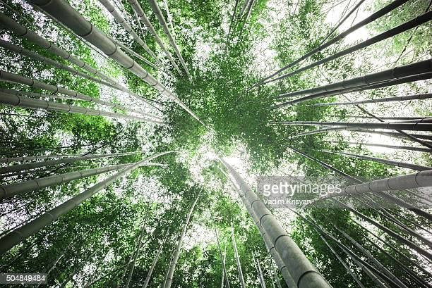 Bamboo Forest, Arashiyama, Kyoto,Japan