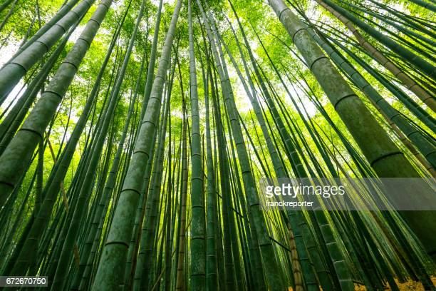bamboo forest in japan - bamboo forest stock photos and pictures