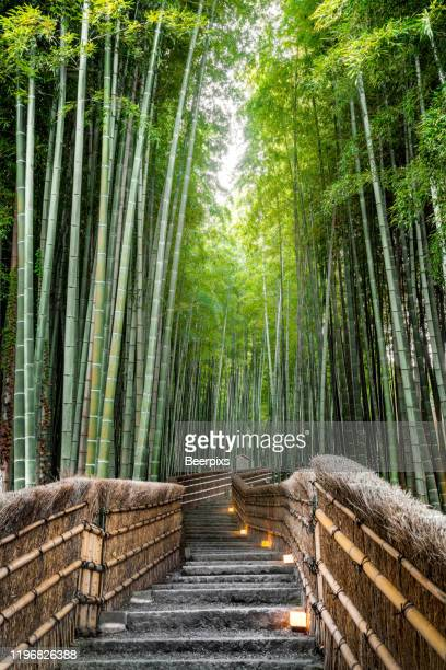 bamboo forest in kyoto, japan. - arashiyama stock pictures, royalty-free photos & images
