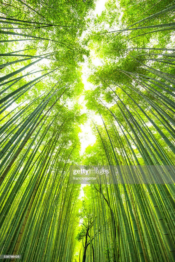 bamboo forest in kyoto japan : Stock Photo