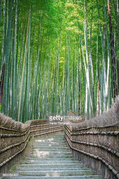 Bamboo forest in temple with stairs