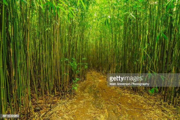 bamboo forest maui hawaii #2 - bamboo forest stock photos and pictures