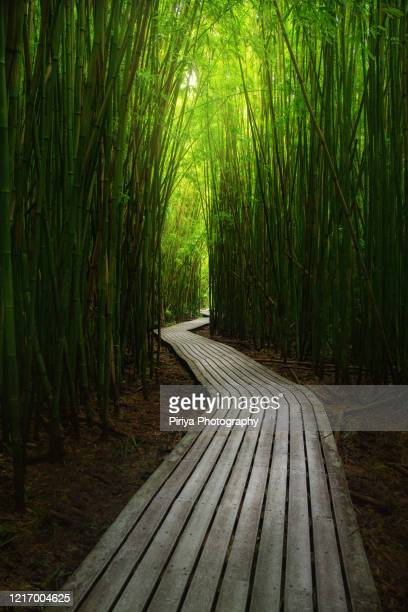 bamboo forest path at maui, hawaii - media_in_honolulu,_hawaii stock pictures, royalty-free photos & images