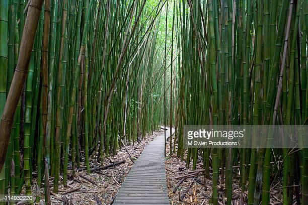 Bamboo forest path in hana, Hawaii
