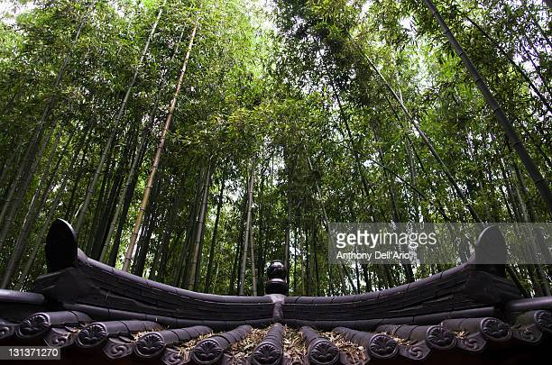 bamboo forest - jeonju stock pictures, royalty-free photos & images