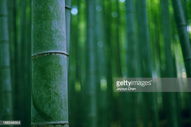 bamboo forest - 竹 ストックフォトと画像