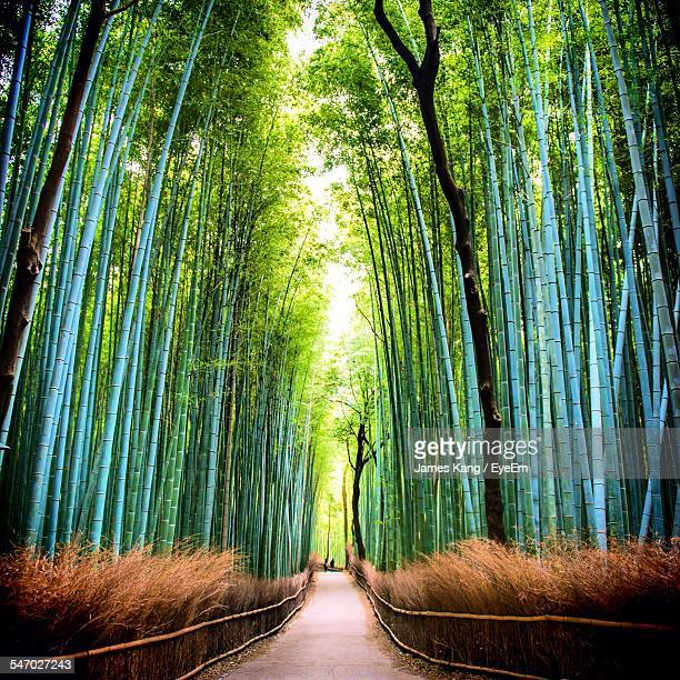 bamboo forest - bamboo forest stock photos and pictures
