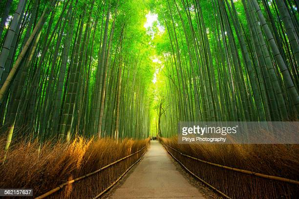 bamboo forest - kyoto prefecture stock pictures, royalty-free photos & images