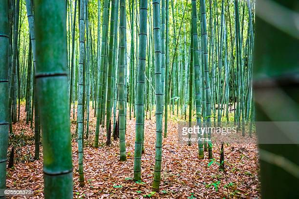 bamboo forest - japanese garden stock photos and pictures