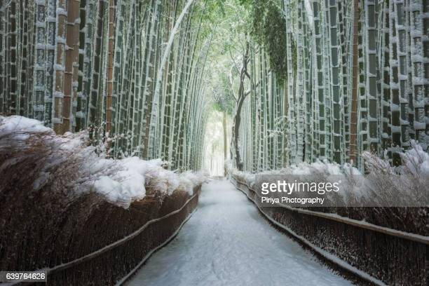 Bamboo forest winter