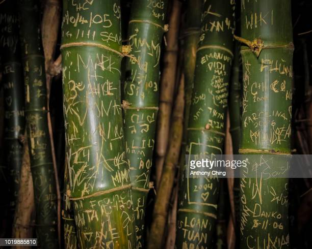 Bamboo Graffiti