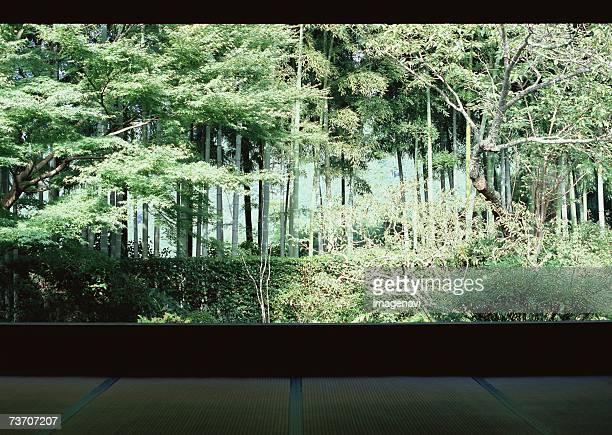 Bamboo grove and garden