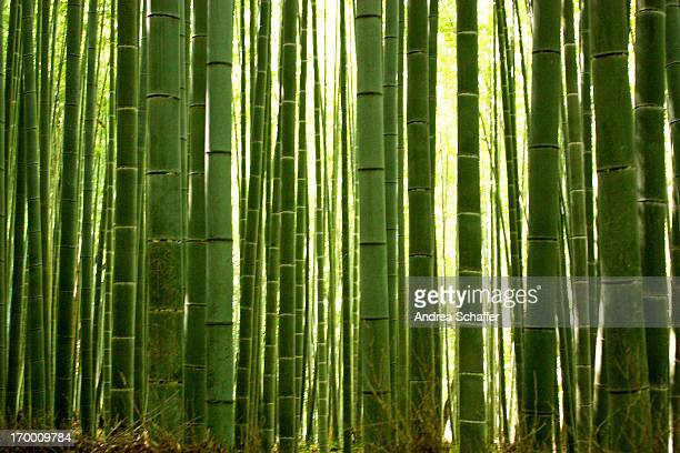 bamboo grove, arashiyama - bamboo forest stock photos and pictures