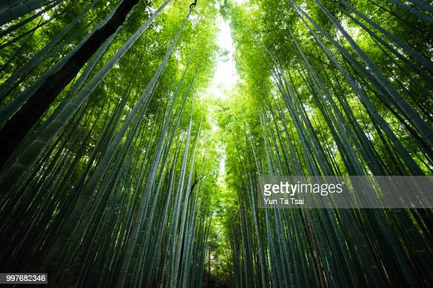 bamboo grove at arashiyama - bamboo forest stock photos and pictures