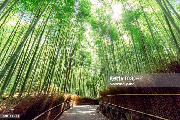 bamboo grove in arashiyama, kyoto, japan - kyoto prefecture stock pictures, royalty-free photos & images