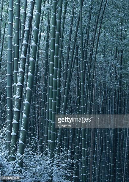 Bamboo grove in winter