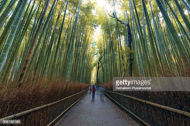 bamboo grove near arashiyama region, kyoto - grove_(nature) stock pictures, royalty-free photos & images