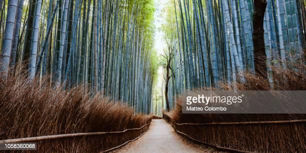 bamboo grove panoramic, arashiyama, kyoto, japan - kyoto city stock pictures, royalty-free photos & images