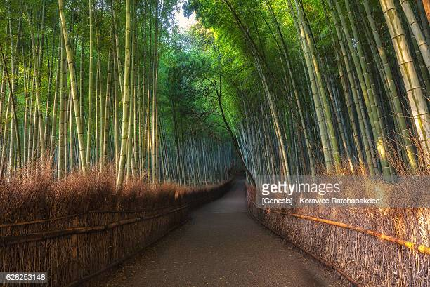 A bamboo grove pathway in Kyoto