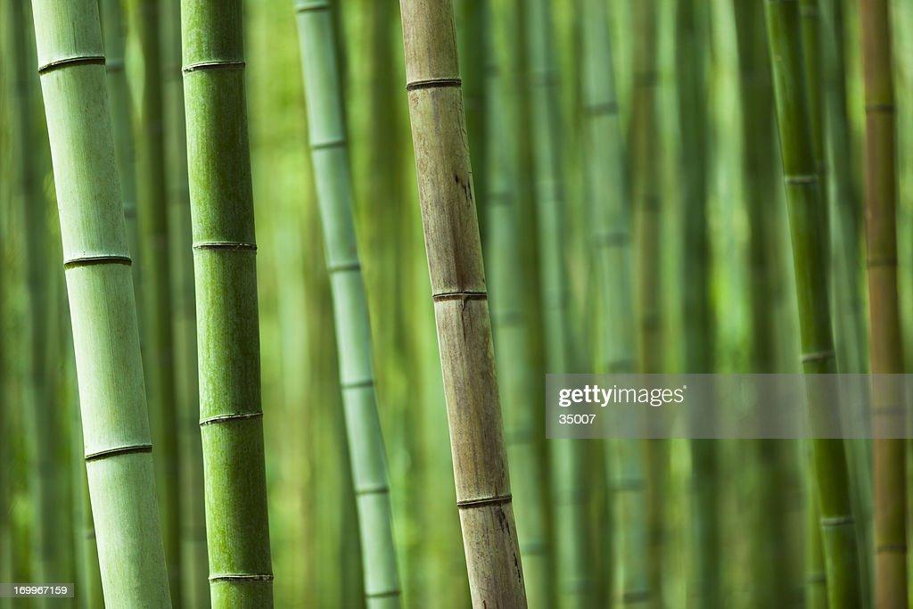 arvoredo de bambu : Foto de stock