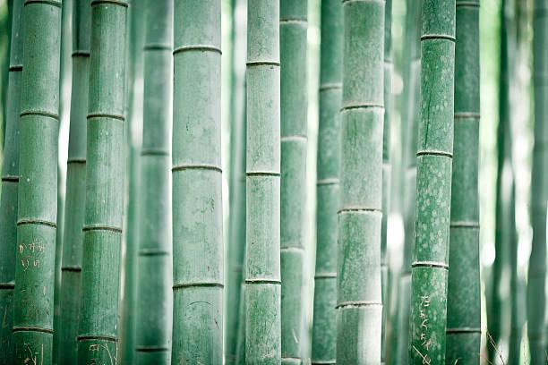Bamboo Grove Wall Art