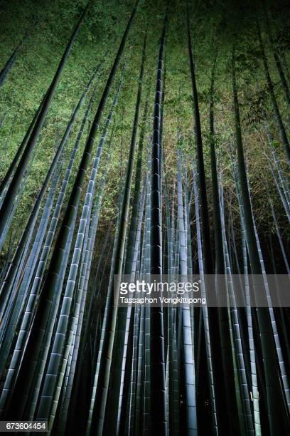 bamboo grove trees forest night scene light up illuminated