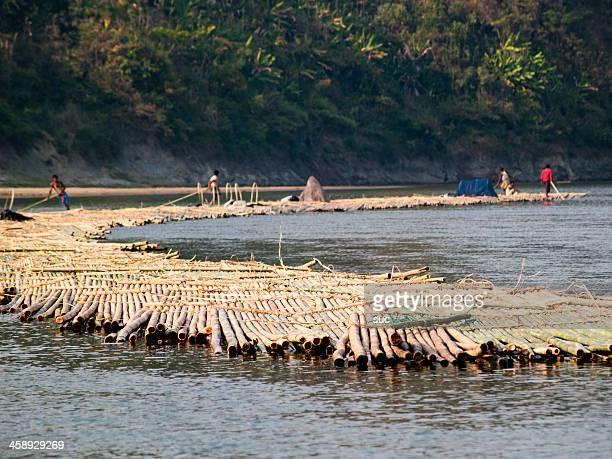 bambù raccolti e trasportati su gommoni mobile - bangladesh foto e immagini stock