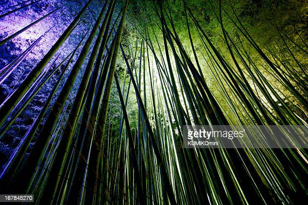 Bamboo in lights
