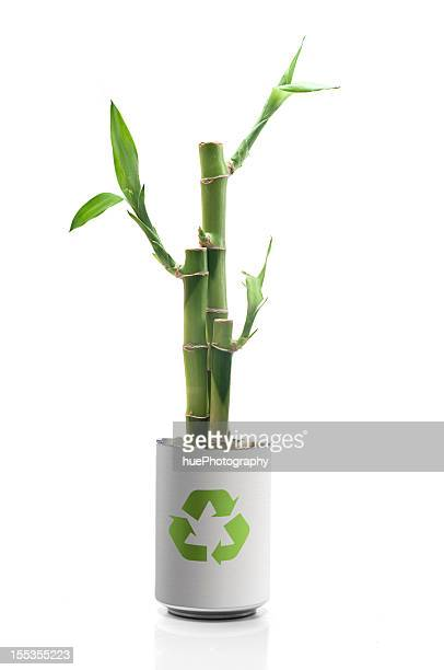 Lucky Bamboo Stock Photos And Pictures Getty Images
