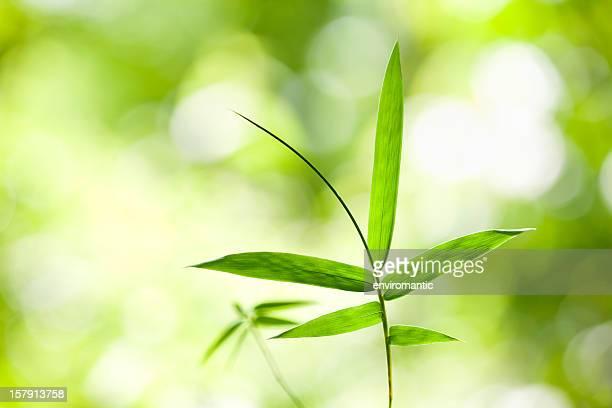 folha de bambu em uma floresta, plano de fundo. - folha de bambu - fotografias e filmes do acervo