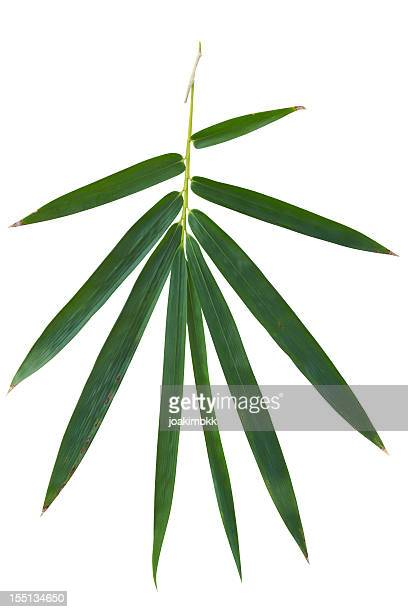 Bamboo leaf isolated on white with clipping path
