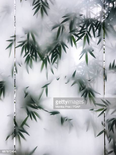 Bamboo leaves in foggy weather