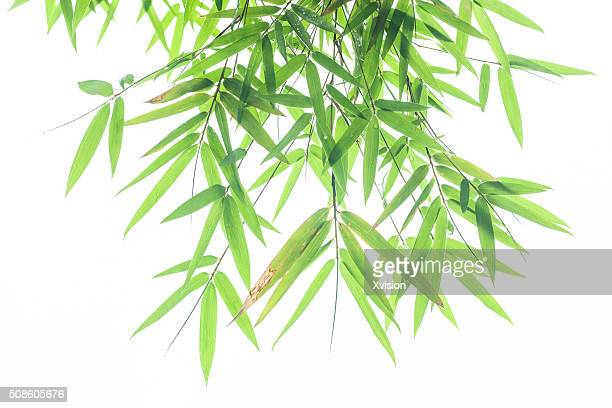bamboo leaves with white background