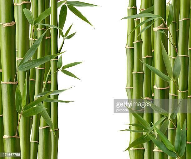 passagem de bambu - folha de bambu - fotografias e filmes do acervo