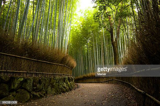 Bamboo path in the early morning